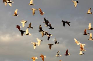 Pigeons fly in the sky in Sanliurfa, Turkey