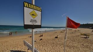 Shark warning signs are seen posted on the beach in the northern New South Wales city of Newcastle on January 17, 2015.