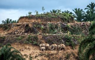 Sobreviventes das palmeiras
