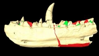 The scan of the jawbone