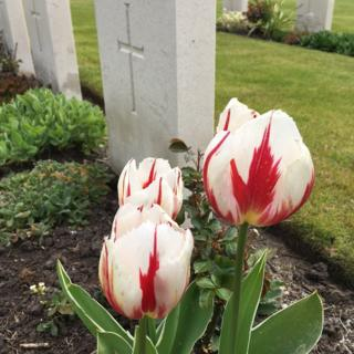Tulips at Brookwood Military Cemetery