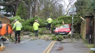 Tree flattens post office van in St Annes Road, Aigburth, Liverpool