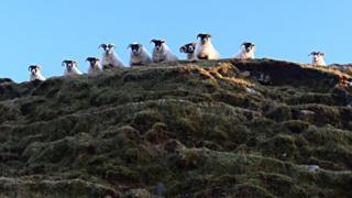 """Neil MacNeill looked up and saw this """"cheeky bunch"""" watching him as he walked at Machir Bay on Islay"""