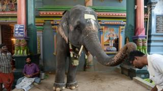 आशीर्वाद देते हाथी