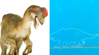 Oviraptor and museum sign