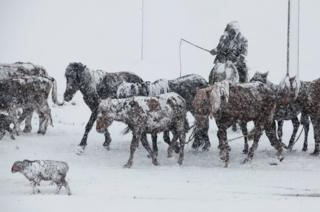 Caballos en la nieve en Xinjiang, China