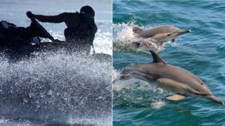 jet skier and dolphins