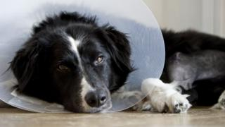 """A judge ruled that the dog's illness amounted to """"serious or family personal reasons"""" for leave"""