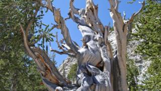 Parque Nacional Great Basin, en Nevada, EE.UU.