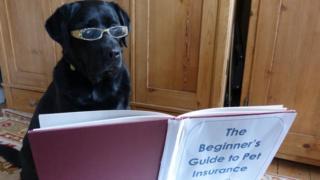 Dog reads book