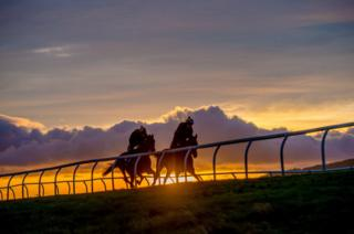 Racehorses train at sunrise at Middleham Park Racing ground, North Yorkshire.