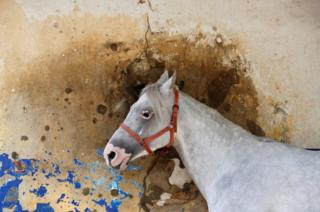 A horse stands in front a bullet-riddled wall at Beirut Hippodrome, Lebanon