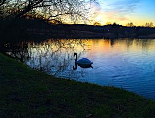 A silhouette of a swan on a lake