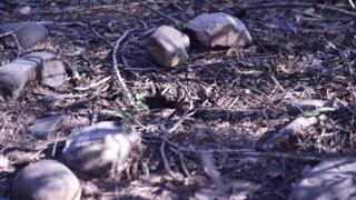 கத்துவாவில் சிறுமி கொலை செய்யப்பட்ட இடம்.