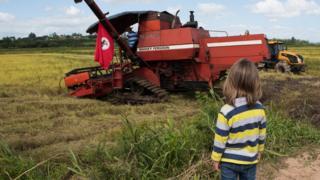 Un niño ve una cortadora de arroz.
