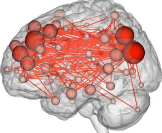 illustration of brain connection map