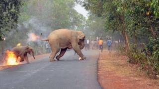 Two elephants, set ablaze by a mob, cross the road to flee