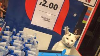 Milo in the supermarket