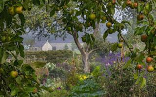 A wild garden with apple trees and purple flowers