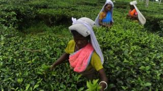 Tea workers in India