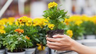 Flowers in garden centre