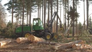 Scottish Woodlands website screen grab