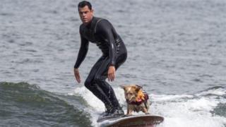 Cuộc thi Chó lướt sóng