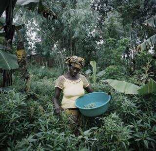 A woman picks plants.