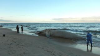 Baleia encalhada em praia brasileira