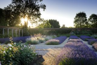 Folly Farm Lavender by Jason Ingram