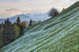 Ladera verde cubierta con flores blancas y cordillera en el fondo.