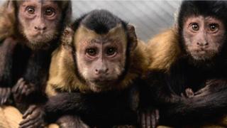 माकडं