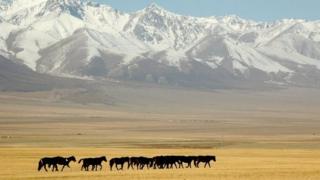 """中国官员希望有更多人到新疆旅游以促进""""民族团结"""""""