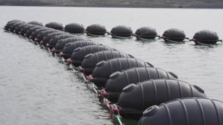 Seaweed farm in Pembroke Dock