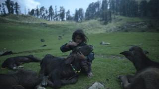 A young girl combs the hair of a water buffalo calf