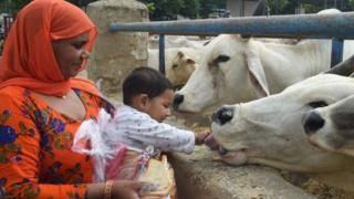 ভারতের বিভিন্ন রাজ্যে এখন অনেক গোশালা তৈরি হয়েছে