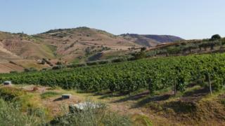 Cesare Nicodemo's winery, Sicily