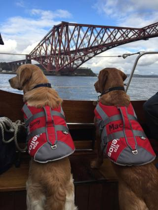 Dogs wearing life jackets