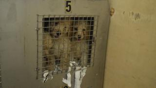 Puppies rescued at Holyhead Port