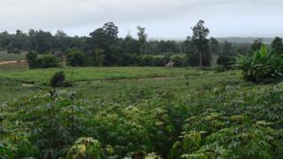 ชาวบ้านส่วนใหญ่ทำกินในพื้นที่ตั้งแต่ก่อนประกาศตั้งเขตอุทยานแห่งชาติไทรทอง