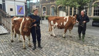 Vanessa Reid and two cows