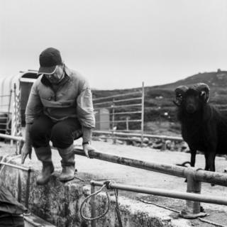 A man jumps off the harbour while next to a ram