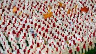Lots of poppies on crosses