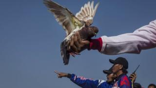 File image of pigeon racers in Indonesia