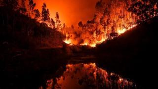 горящий лес в португалии