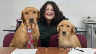 Labradors ready to interview candidates