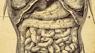 الأمعاء تضم بكتريا ذات أهمية كبيرة
