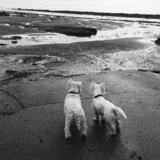 Two terrier dogs looking out over a bay