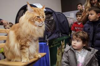 Кіт Кекс став рекордсменом України