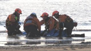 Porpoise rescue
